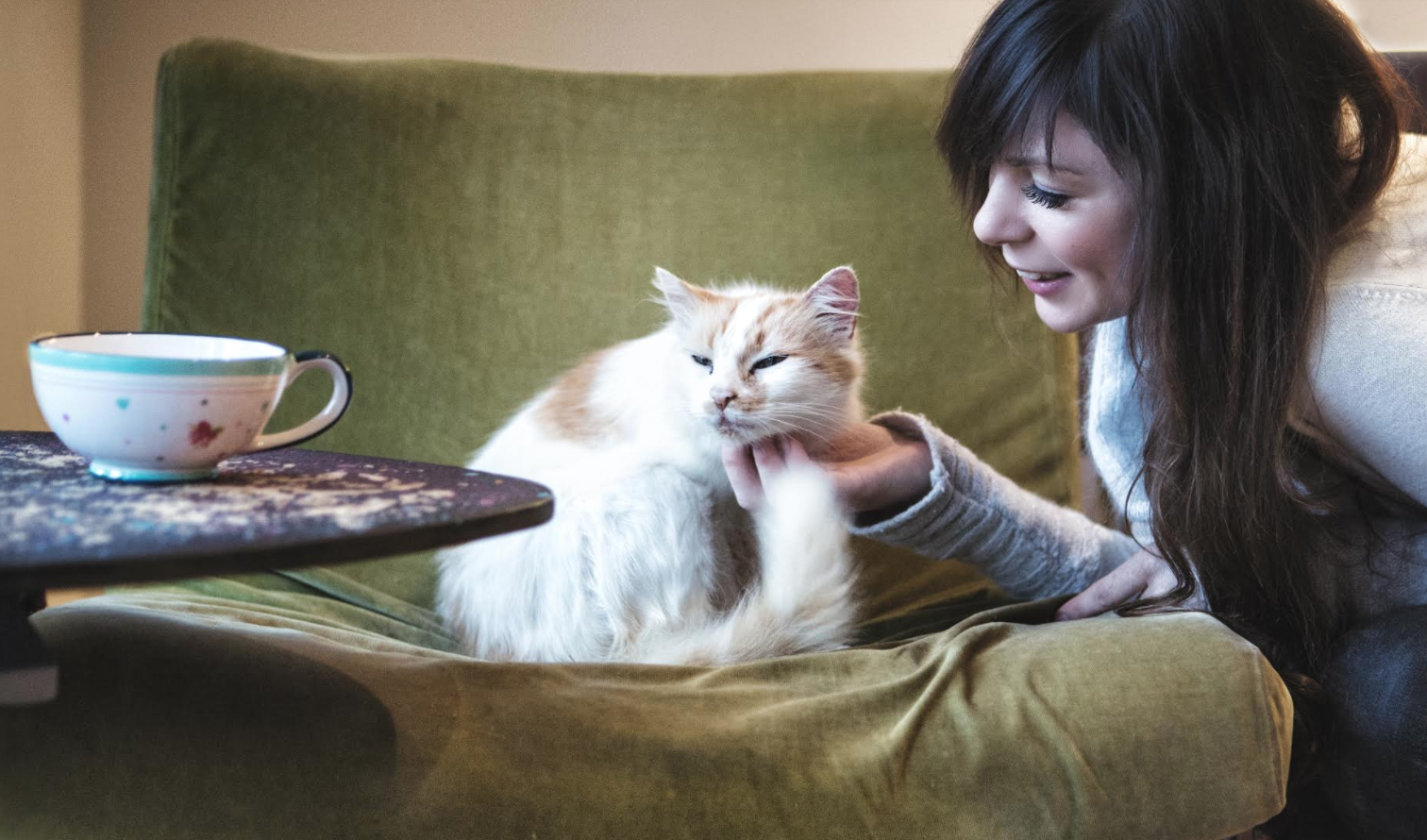 How to get customers excited before you're even trading - Pause Cat Cafe